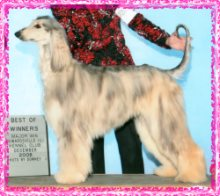 Eve AKC Champion Hosanna Everlasting Love picture