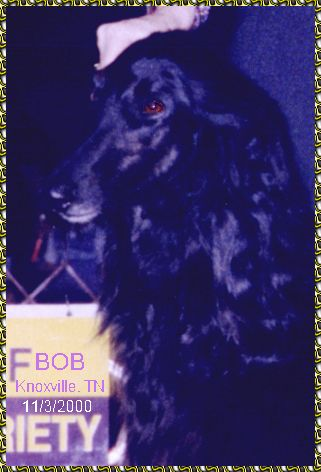 Moses - Afghan Hound show win photo Best of Breed BOB Mr. J. Donald Jones