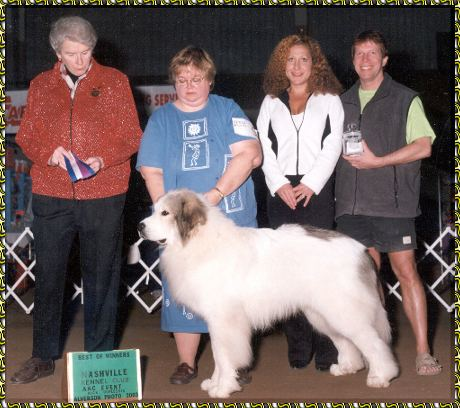 Aaawww Keeshond Great Pyrenees News Akc Show Pets Dog Conformation