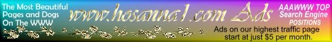 custom graphics design banner linking ADS at hosanna1